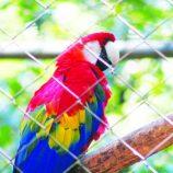 Zoológico deve ser reaberto no dia do aniversário da cidade