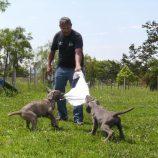 Canil da Guarda Municipal ganha reforço de filhotes