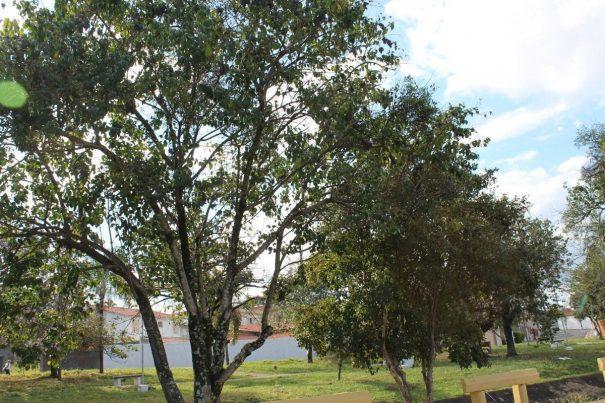 árvores_everton zaniboni (1)