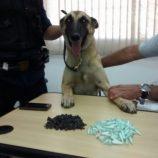 Polícia apreende grande quantidade de drogas no bairro Santa Luzia