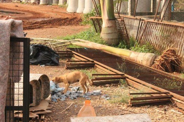 Para Patrícia, local está abandonado pela Prefeitura; cão brinca ao lado de ferragens e troncos (Foto: Ana Paula Meneghetti)