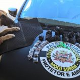 Cão farejador encontra grande quantidade de drogas no Santa Luzia