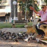 Prefeitura faz alerta sobre pombos e irá promover ações de conscientização