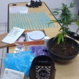 GCM apreende 284 pinos de cocaína e pé de maconha no Santa Luzia