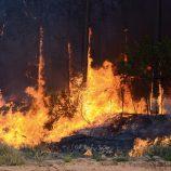 Em chamas: Bombeiros registram 80 focos de incêndio em apenas 7 dias