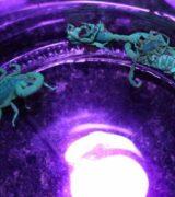 Vigilância Ambiental realiza nova captura de escorpiões no cemitério municipal