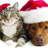 """""""Querido Papai-Noel:  só o amor  pode me salvar"""", diz carta fictícia de animais"""