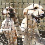 Outra vez, Bem-Estar Animal é alvo do MP; quase 2 mil animais esperam castração