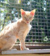 Mogi Guaçu amplia proteção a animais com orientação, denúncias e fiscalização