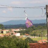 Ações de combate ao comércio e uso do cerol ficam mais rigorosas