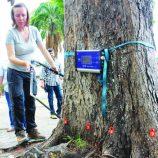 """Árvores da Rui Barbosa passam por """"check-up"""" para avaliação de riscos"""