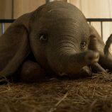 Releitura de Dumbo, de Tim Burton, segue em cartaz