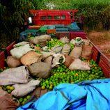 Caminhão com mexericas furtadas é apreendido em rodovia na zona rural