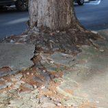 Plano de Arborização enviado à Câmara Municipal quer adequar política ambiental