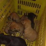 Acusado de espancar cachorra até a morte é multado em R$ 24 mil