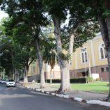 Empresa será contratada para retirada de árvores da Praça São José e Floriano Peixoto