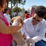 Centro de Controle de Zoonoses inicia vacinação de cães e gatos contra raiva