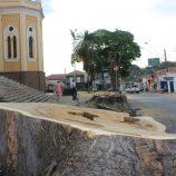 Erradicação das árvores muda visual da São José; cortes devem terminar 5ª