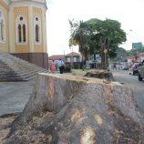 Raízes das sibipirunas cortadas na Praça São José serão removidas 2ª e 3ª