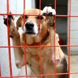 BEA já realiza castração; campanha beneficiará cerca de 800 cães e gatos