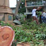 Após chuva forte, árvore cai e derruba busto do Cel. João Leite, no Jd. Velho