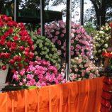 Carnaval de Holambra tem carros alegóricos com flores e sorvetes