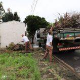 Serviços de limpeza e coleta de galhos e entulhos são intensificados em Mogi