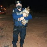 Guarda Municipal recupera cachorros roubados