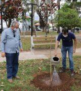 Plantio de ipês na Praça Francisco Alves marca o Dia da Árvore em Mogi Mirim