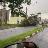 Temporal causa queda de árvores e pontos de alagamento em Mogi Mirim