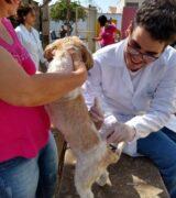 Centro de Controle de Zoonoses vacina cães e gatos contra a raiva animal