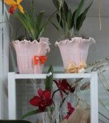 Dia das Mães merece flores que encantam e alegram. Há opções de cestas de café