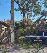 Árvore de grande porte cai na esquina das ruas Dr. Jorge Tibiriçá e Padre José