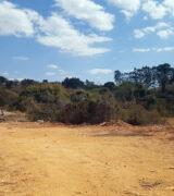 PM flagra crime ambiental em área de preservação